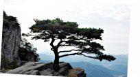Phuơng án nào tối ưu để đưa một cây từ rừng, hay sân nhà vào chậu bonsai?