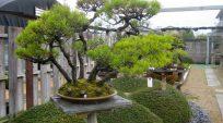 Nhà Vườn Yoichi Nakanishi (Chinsho-en) – Nhật Bản