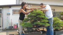 Nhà Vườn Nobuichi Urushibata (Taisho-en) – Phần cuối