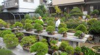 Nhà Vườn Nobuichi Urushibata (Taisho-en) – Phần 1 ( 3 phần)