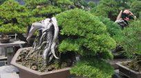Nhà Vườn Nobuichi Urushibata (Taisho-en) – Phần 2 ( 3 phần)