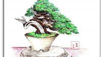 Bộ Sưu tập ảnh Dáng Bonsai – Phần 5