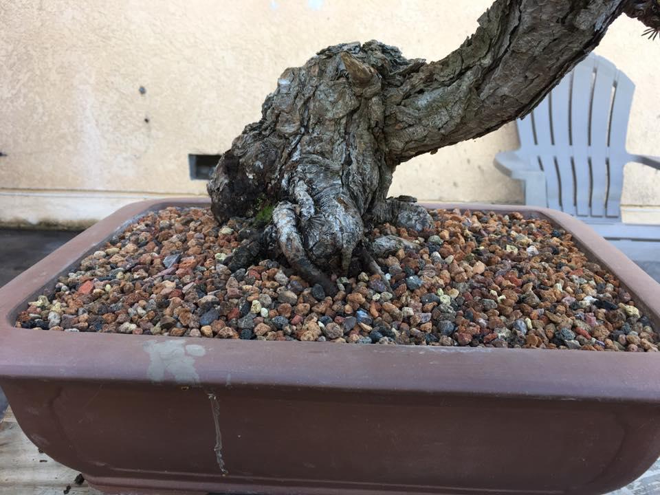 Rải sỏi trên mặt tuy không thẩm mỹ (vì cây training) nhưng giúp không có cỏ dại và khi tưới đất không văng ra ngoài